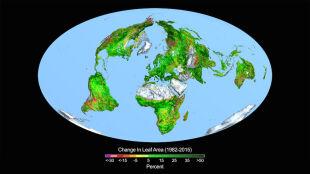 Ziemia coraz bardziej zielona przez nadmiar CO2