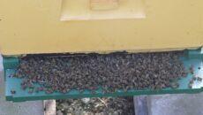 Jednej nocy zmarły wszystkie pszczoły