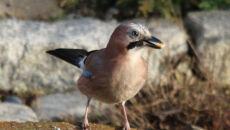 Ptaki zimową porą w obiektywie Reporterki 24 barmy