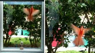 Miliony ptaków rozbijają się o okna