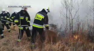 Straż pożarna i służby Parku gaszą ogień (Biebrzański Park Narodowy)