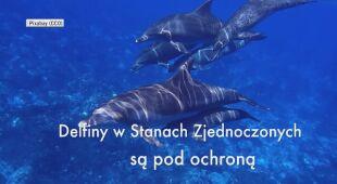 Martwy delfin znaleziony u wybrzeży Kalifornii